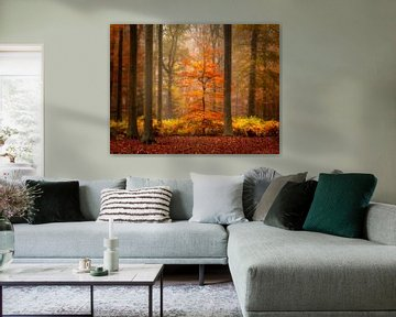 Herbst auf seiner Spitze in einem schönen Wald in den Niederlanden von Jos Pannekoek
