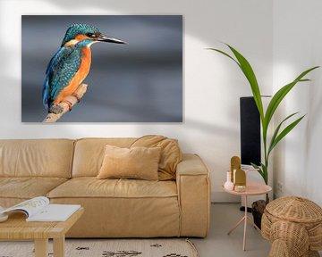 ijsvogel (kingfisher) von Jitske Van der gaast