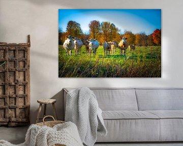 Nieuwsgierige koeien van Iris van Loon