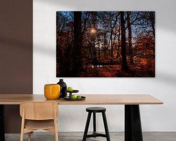 DE - Autumn mood in the castle park Laupheim van Michael Nägele