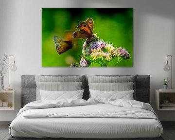 vlinders bij bloem von Petra De Jonge