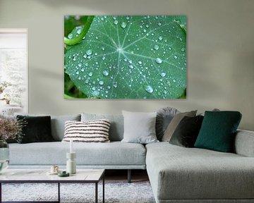 groen blad met regendruppels van Petra De Jonge