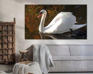 Witte zwaan in de herfst in Nederland