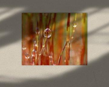 Tropen im Rot von Caroline Lichthart