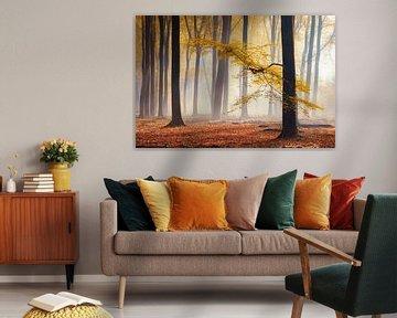 Gele herfst blaadjes in mistig bos van Rob Visser
