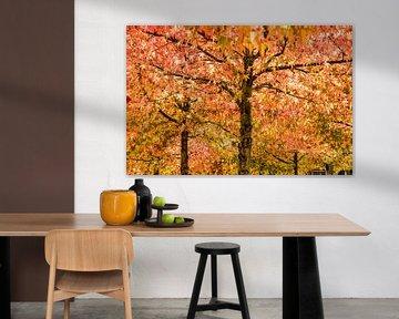 Amberbomen in de herfst