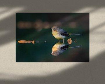 Große gelbe Bachstelze von Joop Lassooij