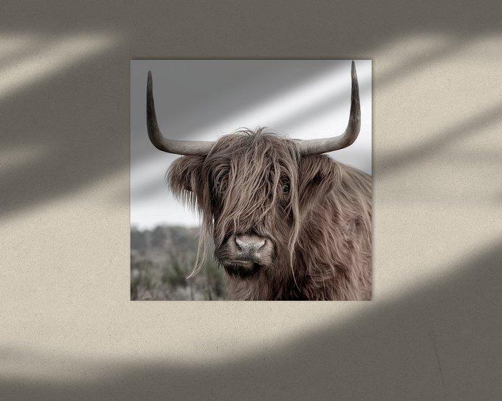 Sfeerimpressie: Schotse Hooglander uit het Gooi van Dennisart Fotografie