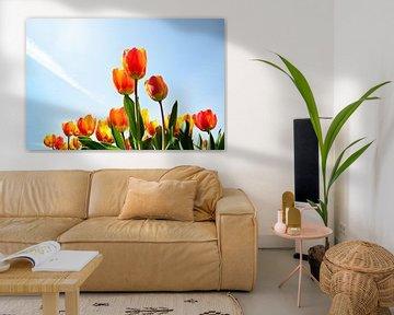 Tulpen gegen einen blauen Himmel aus einer niedrigen Sicht von iPics Photography