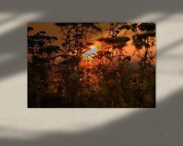 Autumn colours von Nildo Scoop