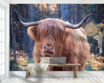 Schotse Hooglander van Lisetteswerken