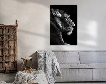 Porträt einer Löwin, schwarz-weiß von Heino Minnema