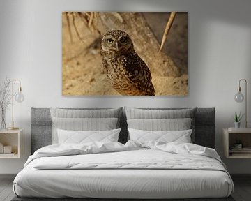 Owl von Lennard Kazen