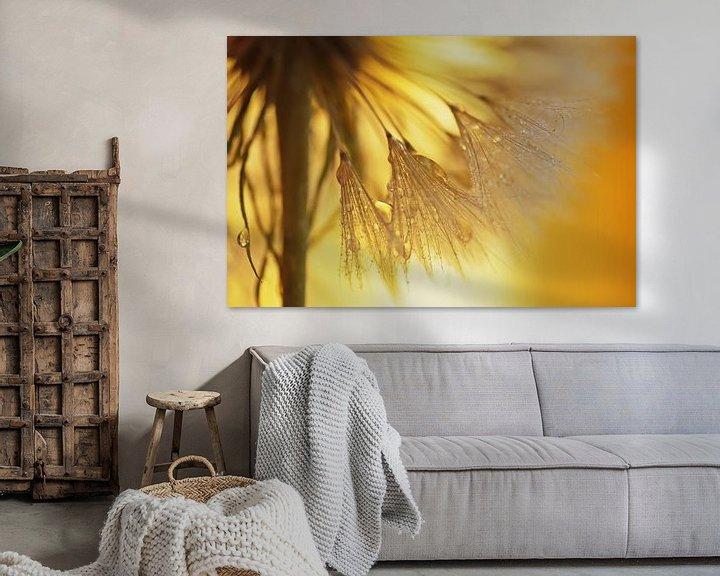 Sfeerimpressie: Paardebloemen licht van Tanja Riedel