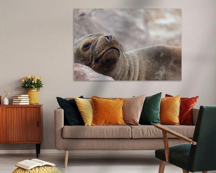 Beispiel: zeehond, seal, peru von Marlou van Hal