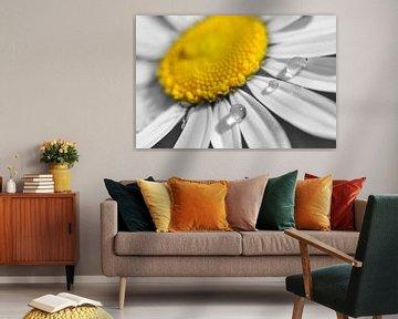 Druppels op bloem von Corinne Welp