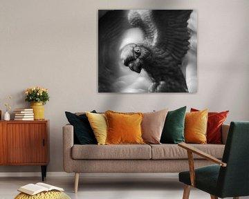 Papagaai von Paul Glastra Photography