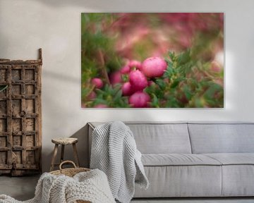 Roze bes von Paul Glastra Photography