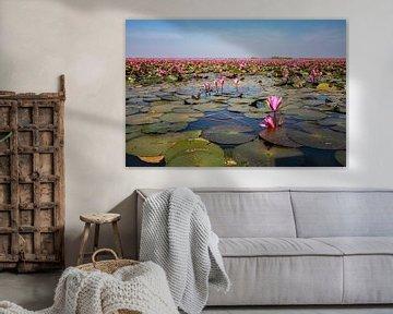Rode waterlelies III von Anneke Hooijer