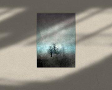 NOVEMBER FOREST COLORED MOODY von Pia Schneider