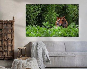 Portret van een tijger von Angelo de Bruin
