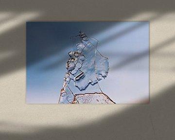 ice art van Els Fonteine