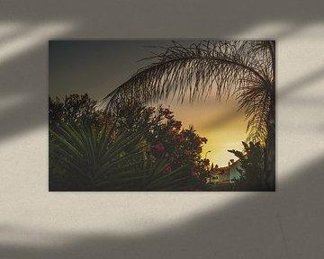 Perfecte zomeravond in Portugal met zonsondergang en palmboom van Nynke Nicolai