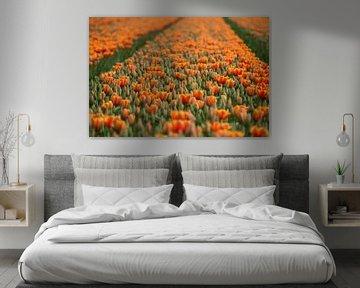Tulpen! von Evelien Heuts-Flachs