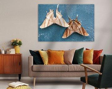 Een reuze zwaluwstaartvlinder van Marcel Derweduwen