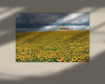 Veld met zonnebloemen van Fokje Otter