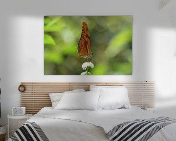Oranje vlinder op bloem van Berg Photostore