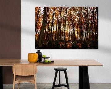 herfst kleuren van Werner V.M.