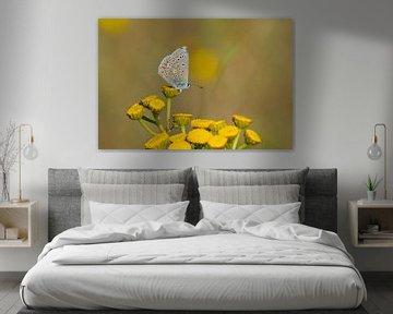 Icarusblauwtje op gele bloem van Remco Van Daalen