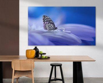 Vlinder von Judith Robben