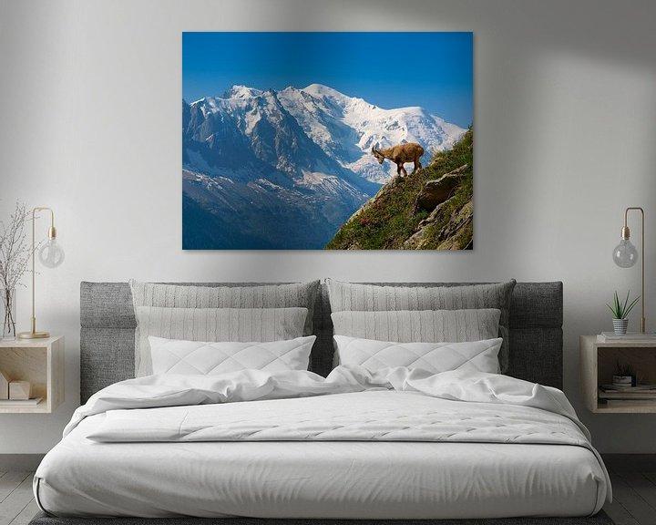 Sfeerimpressie: Jonge steenbok voor de Mont Blanc van Menno Boermans