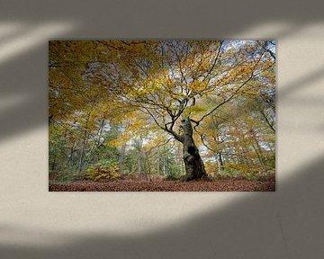 Levensboom (compositie 2) van Remke Spijkers