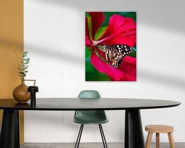 Tropische vlinder in rode bloem van Anouschka Hendriks