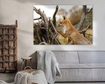 Jonge vos op de uitkijk sur Yvonne van Dormolen