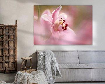 Orchidee von Yvonne van Dormolen