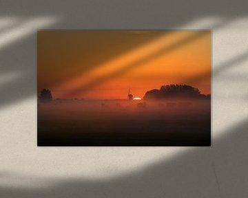 Koeien verstopt in de mist van Wilco Bos
