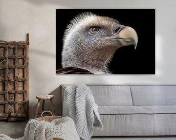 Vale gier portret van Hermen van Laar