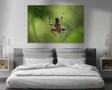 Spinne im Netz mit Beute von Berg Photostore