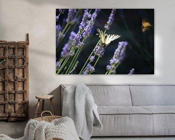 Schmetterling auf Lavendel von Fotojeanique .