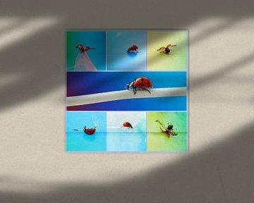 Glückskäfer 34 von Heike Hultsch