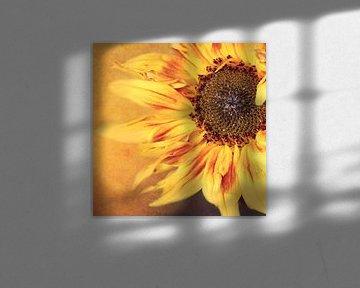 Sonnenblume von Heike Hultsch