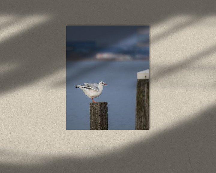Beispiel: Gull on wooden beachpole von Kim de Been