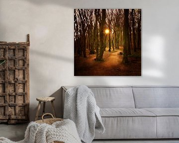 Sonnenaufgang im Gespensterwald van Heike Hultsch