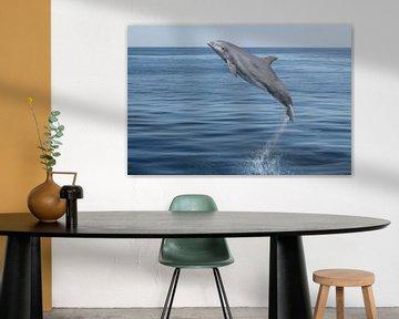 Der springende Delphin van Heike Hultsch
