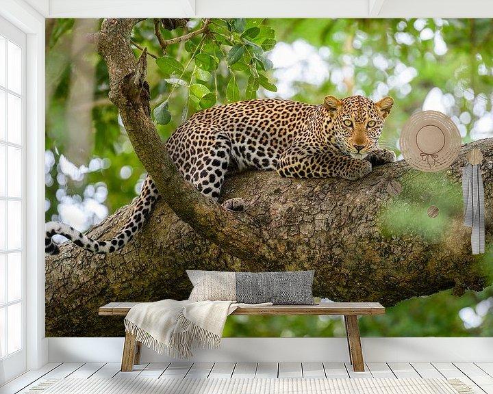 Sfeerimpressie behang: Luipaard in een boom van Richard Guijt Photography