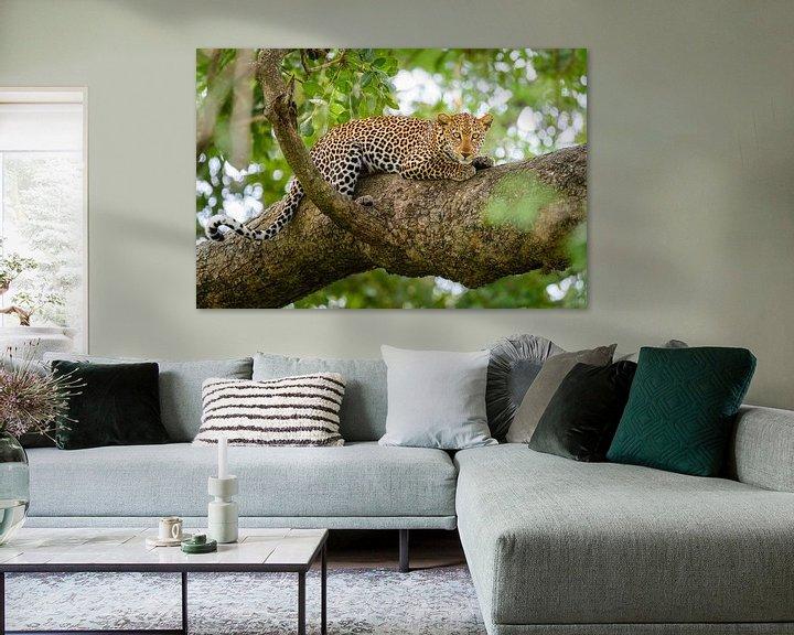 Sfeerimpressie: Luipaard in een boom van Richard Guijt Photography